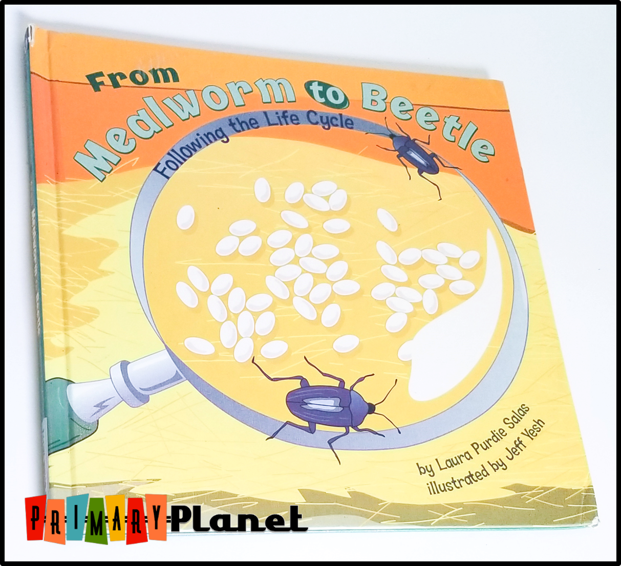 Image of the cover of From Mealworm to Beetle following the life cycle.